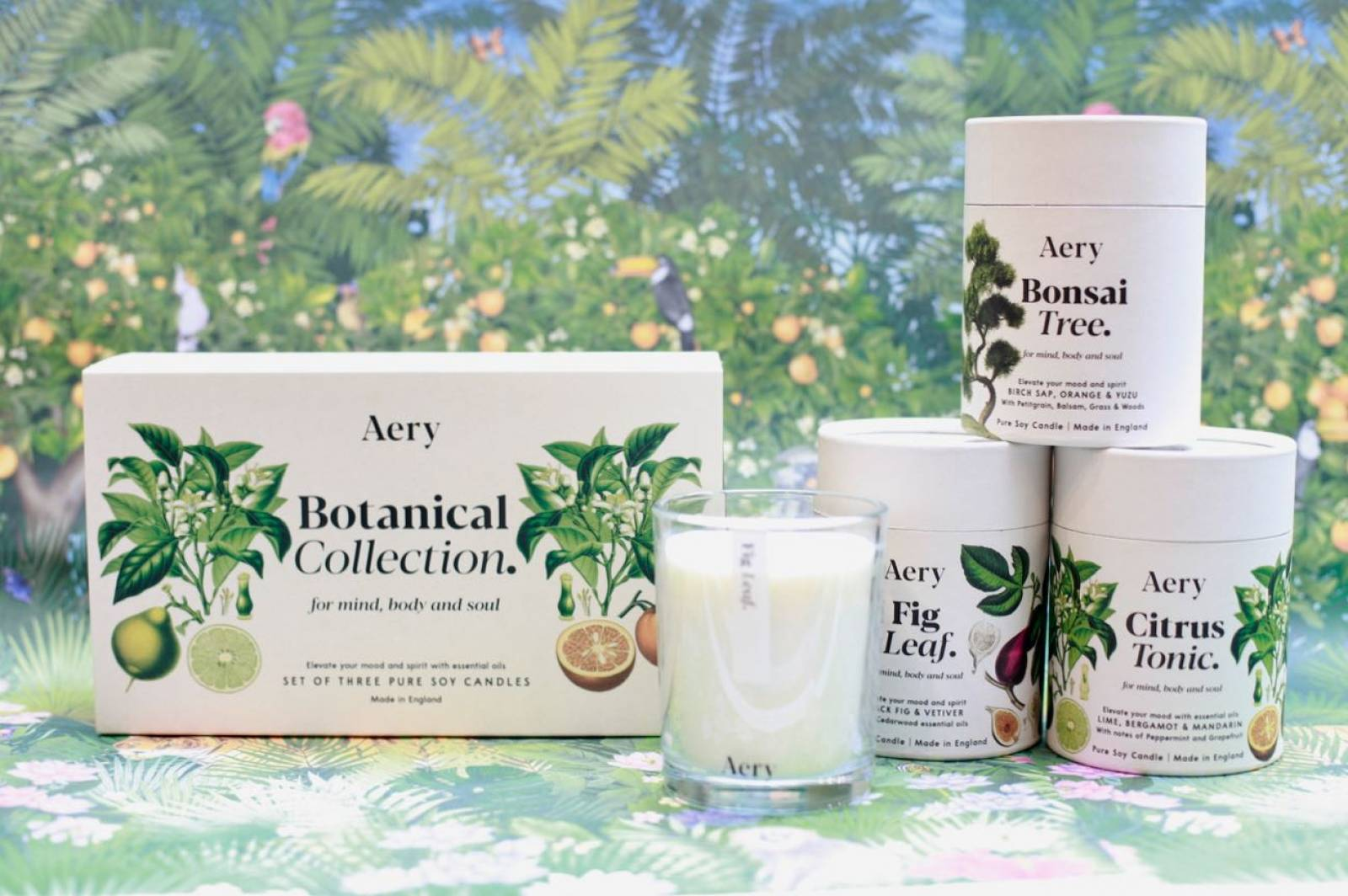 Bonsai Tree Boxed Candle By Aery thumbnails