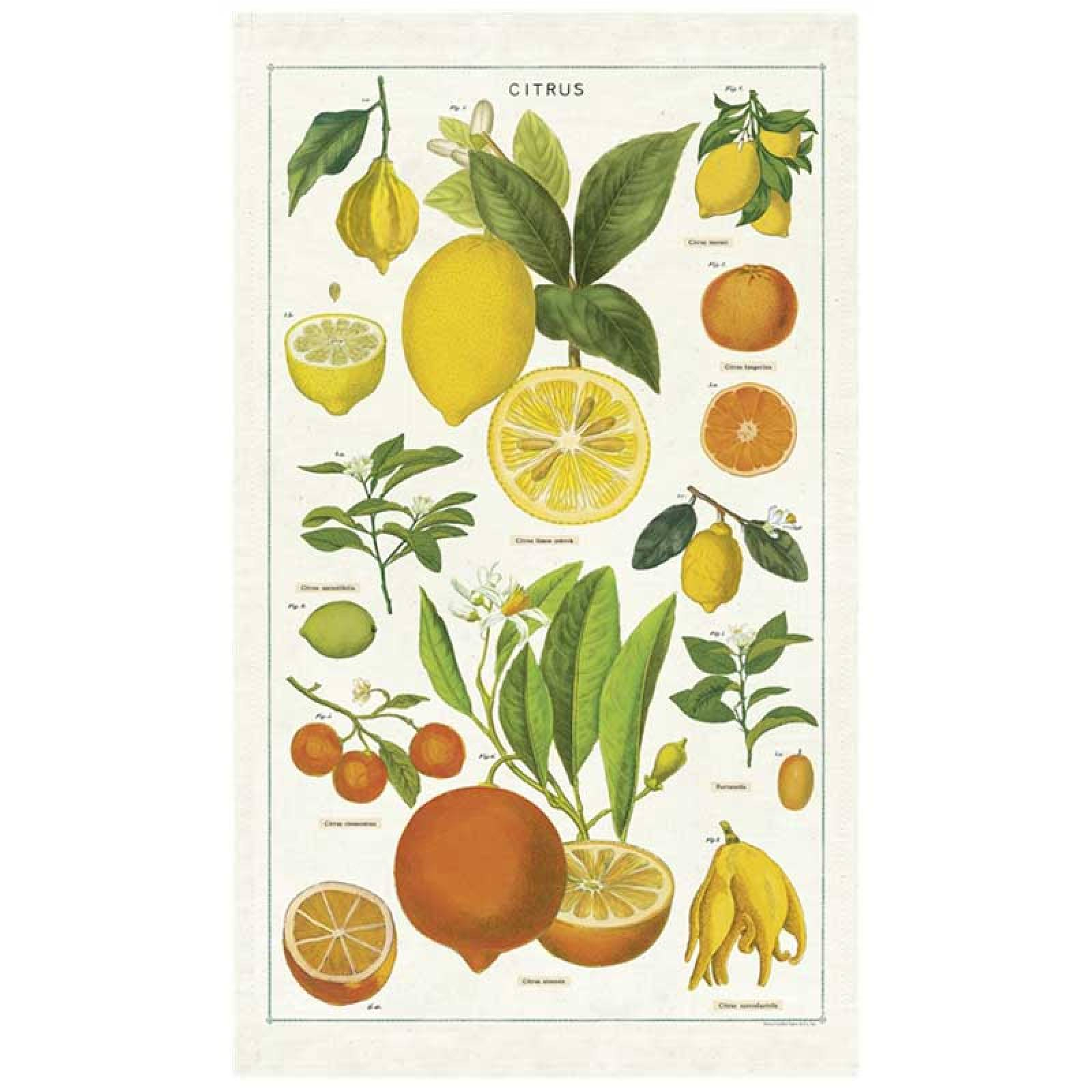 Citrus Tea Towel With Gift Bag
