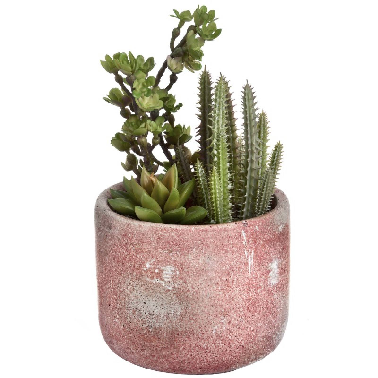 Potted Artificial Cacti And Succulent thumbnails