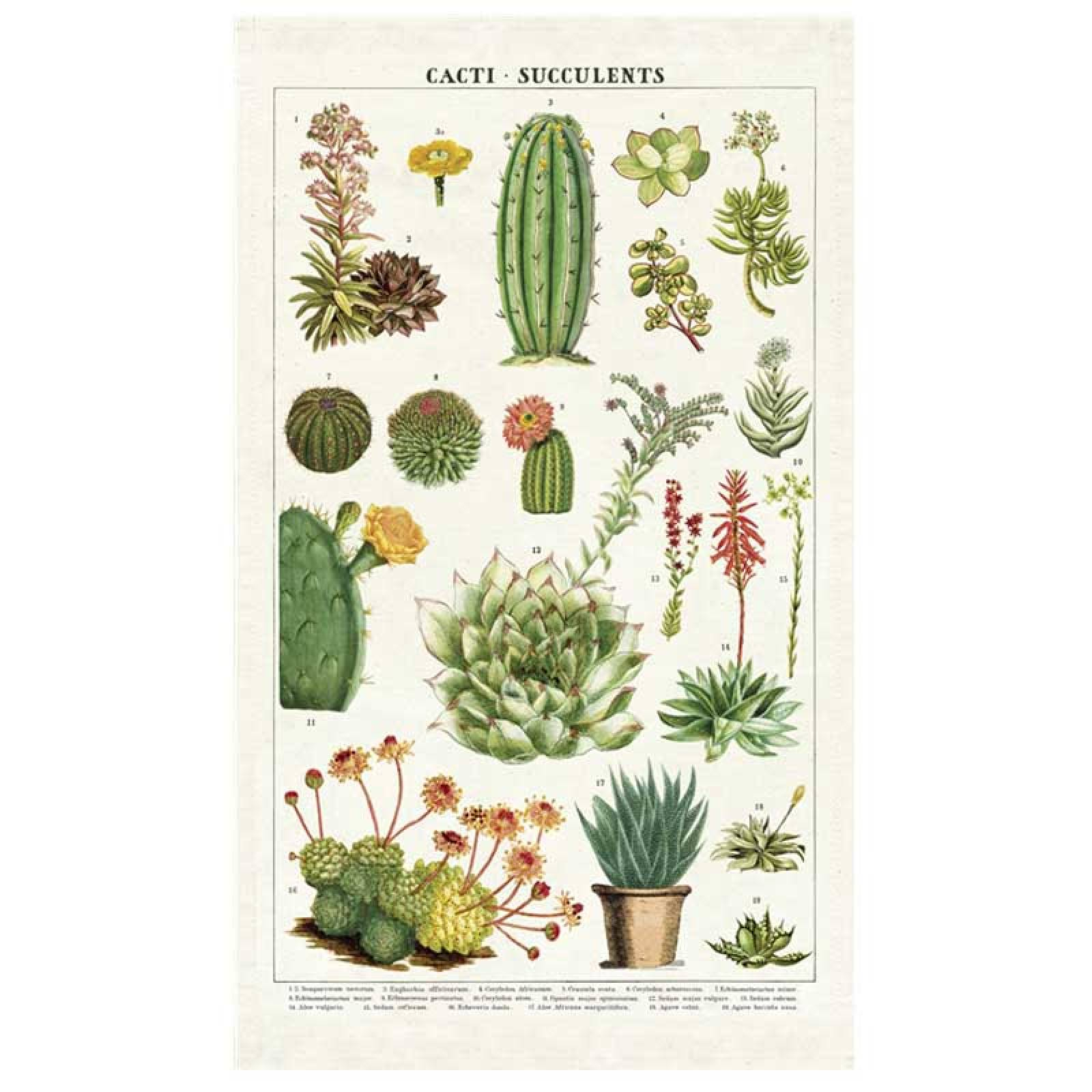 Succulents Cotton Tea Towel With Gift Bag