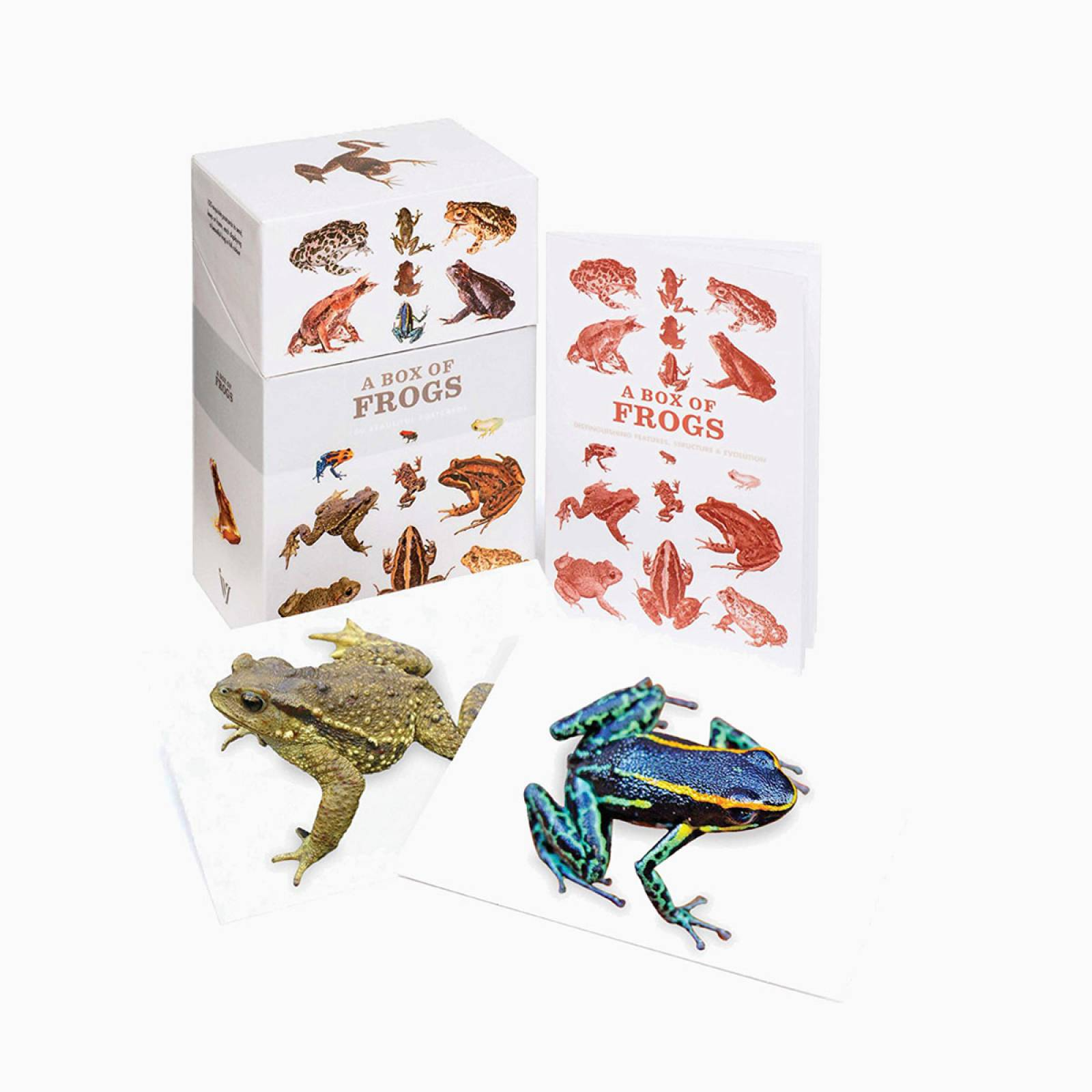 A Box Of Frogs  - Box Set Of 100 Postcards