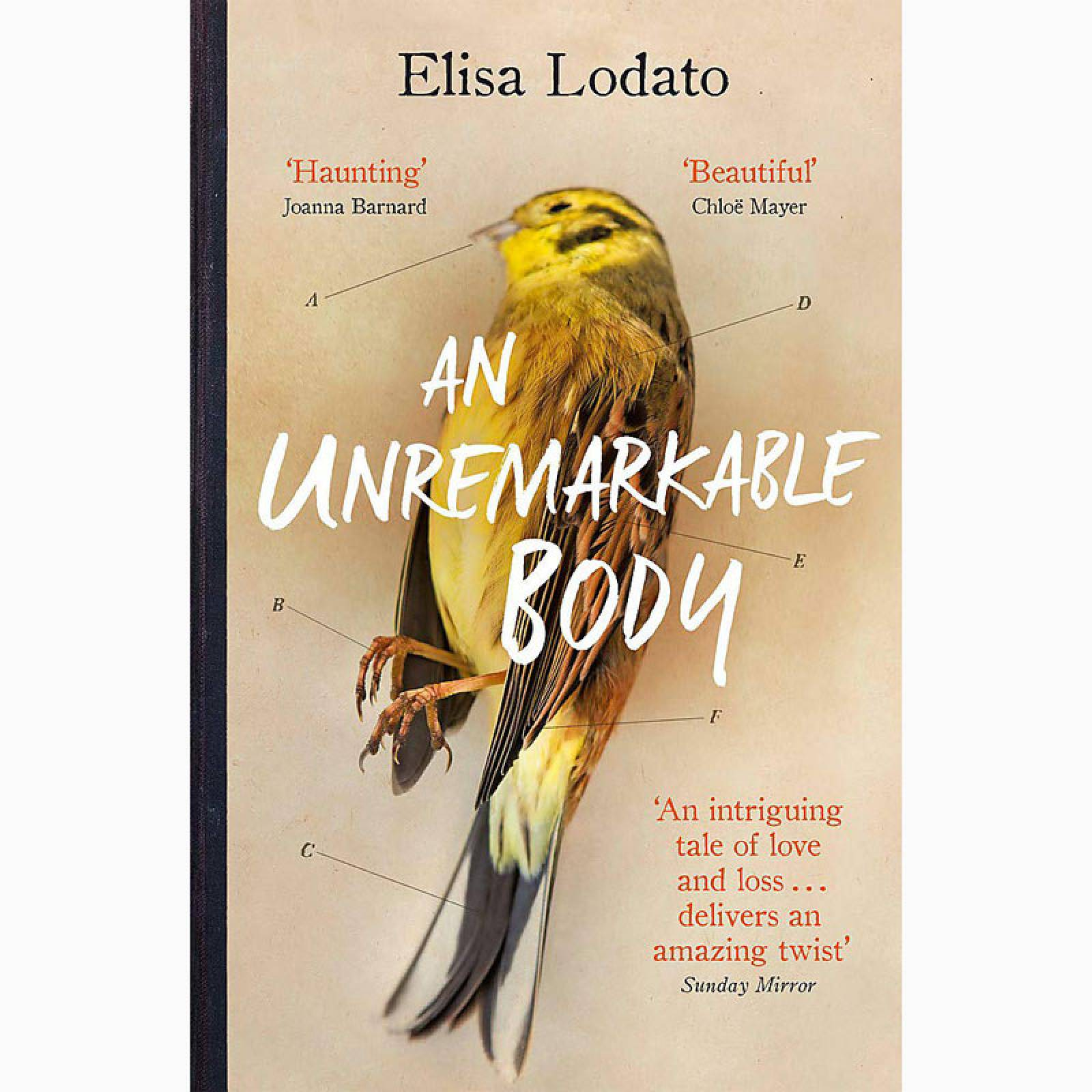 An Unremarkable Body - Paperback Book