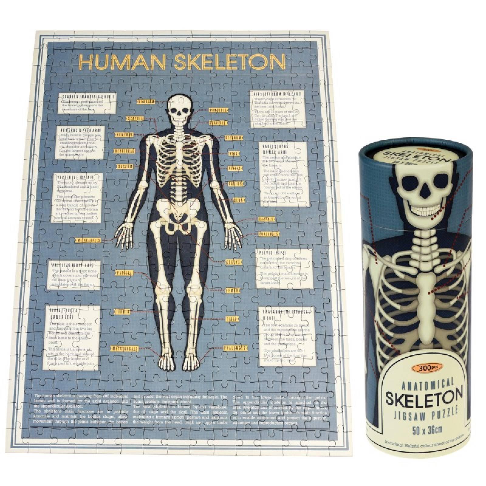 Anatomical Skeleton Puzzle In Tube Box
