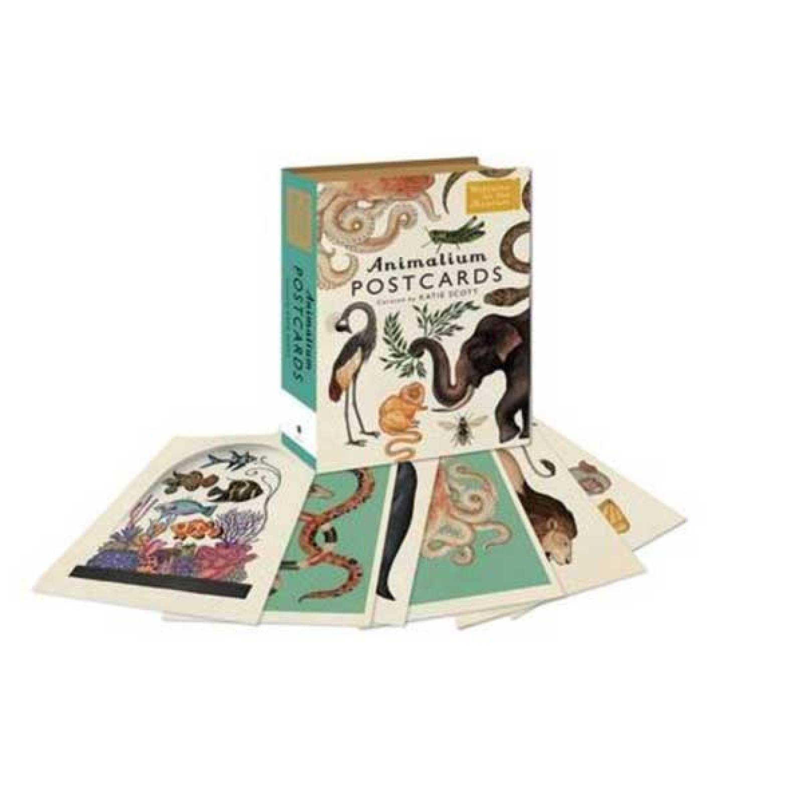Animalium Box Of 50 Postcards