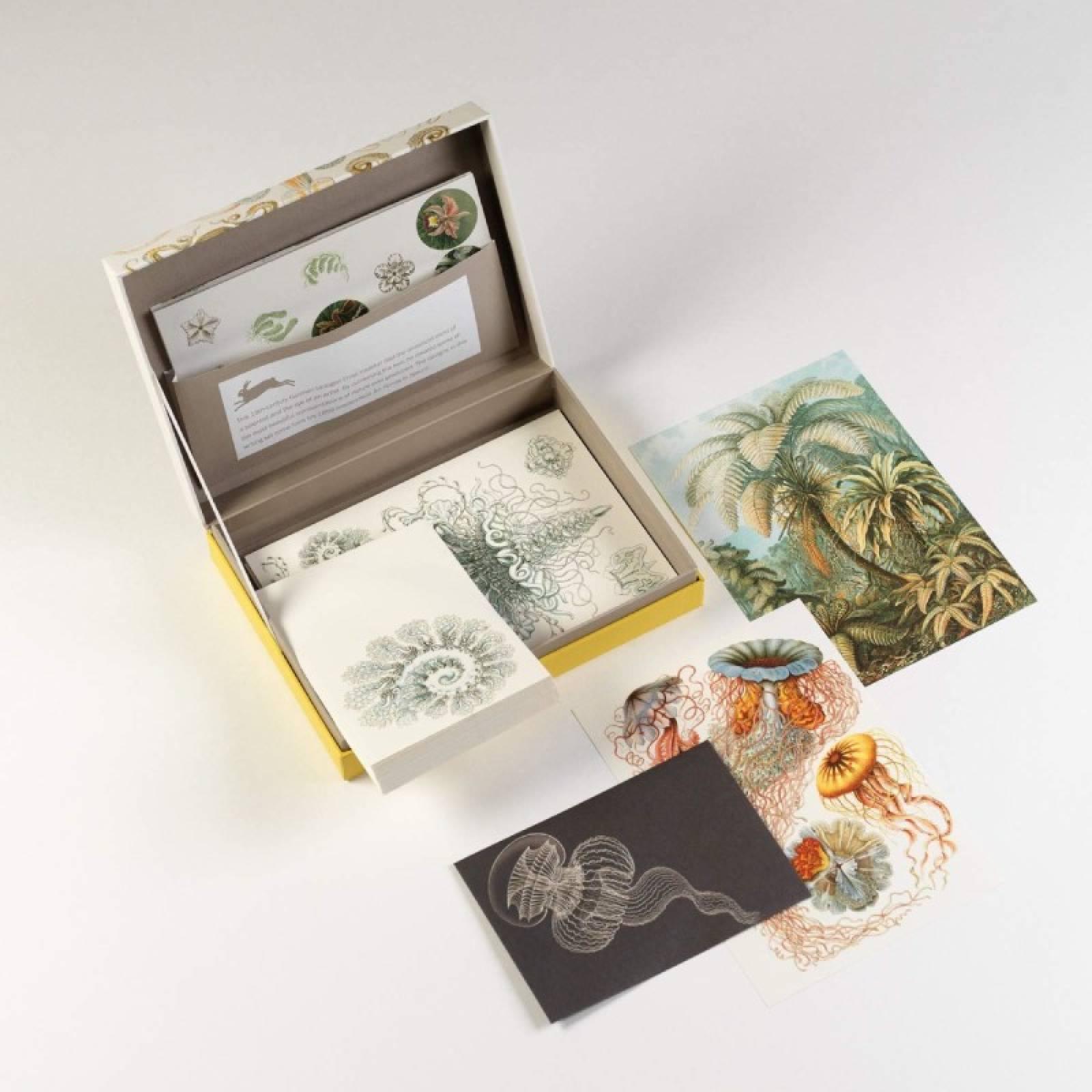 Artforms In Nature - Letter Writing Set thumbnails