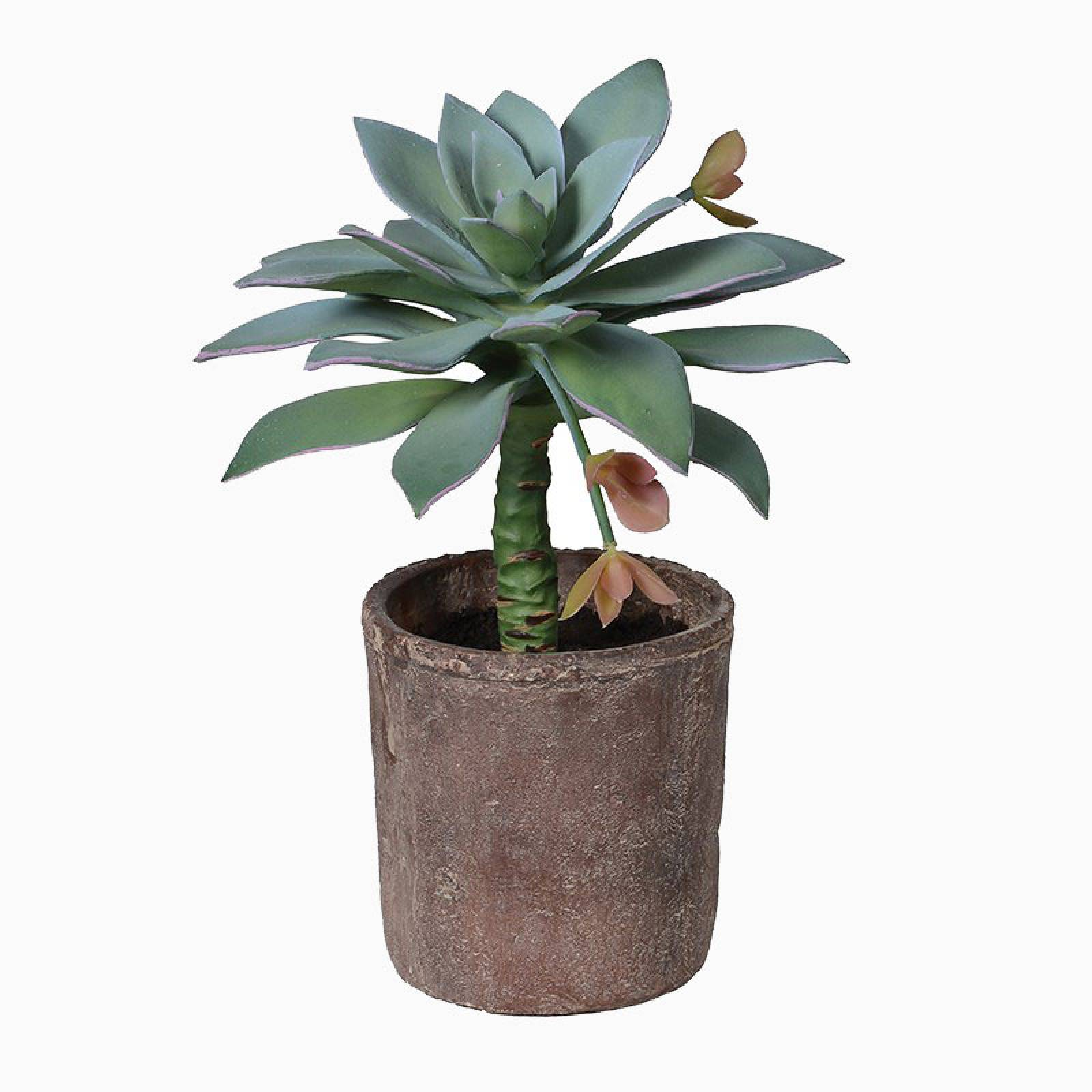 Artificial Anthonyi Potted Succulent in Terracotta Pot thumbnails