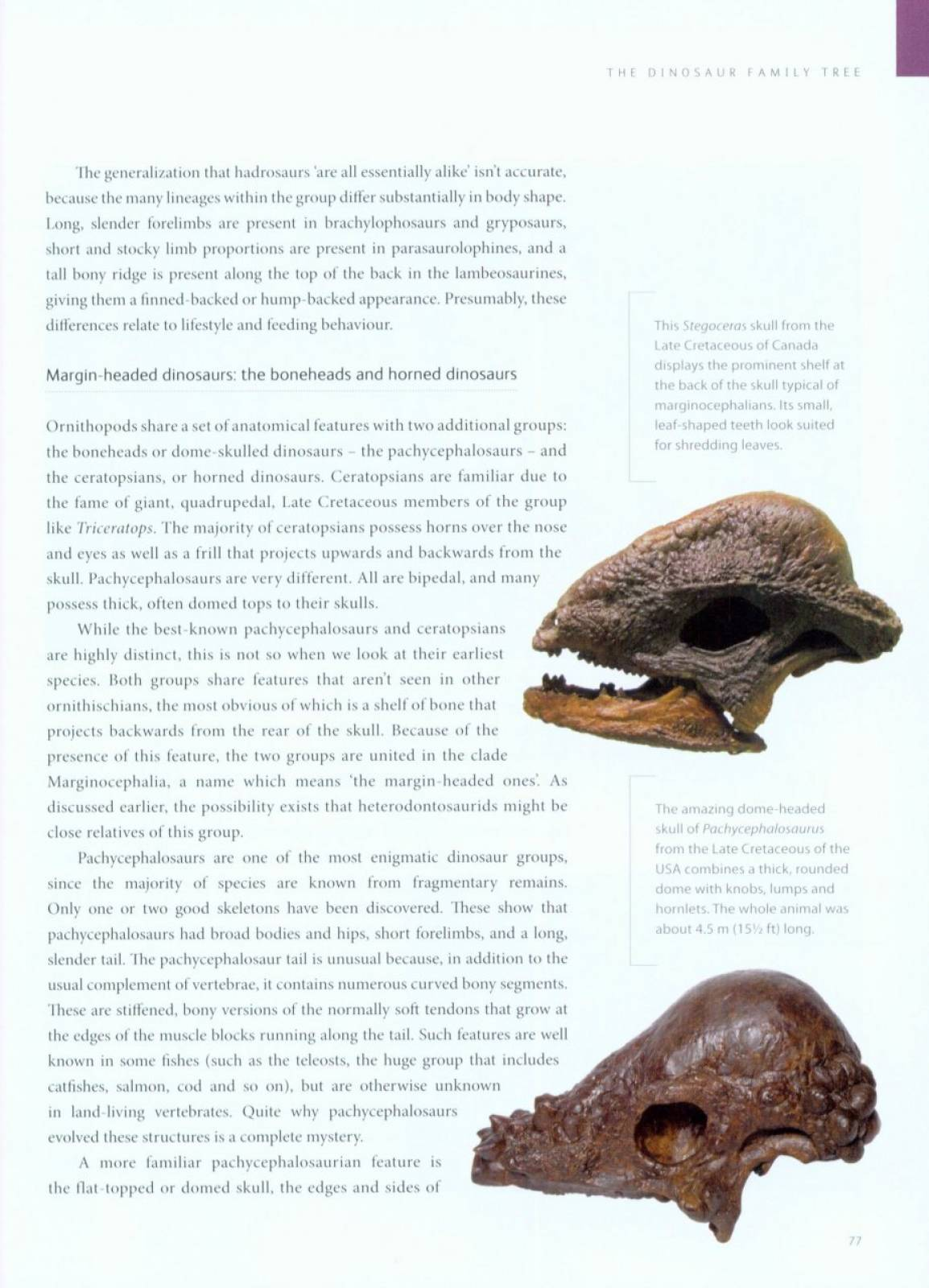Dinosaurs How They Lived and Evolved (Natural History Museum) thumbnails