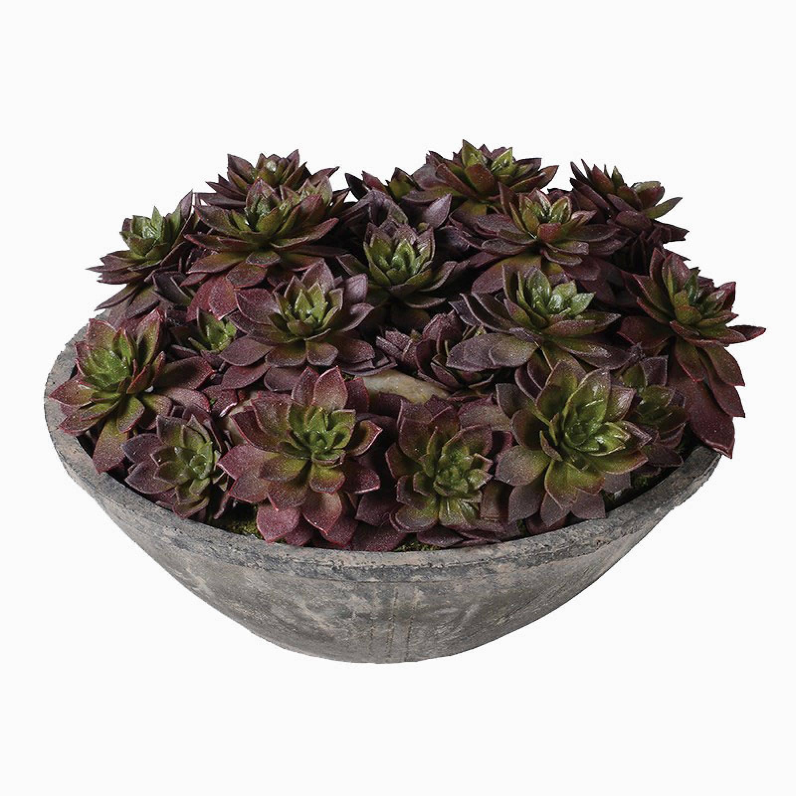 Echeveria Artificial Succulent Plants In Cement Bowl thumbnails