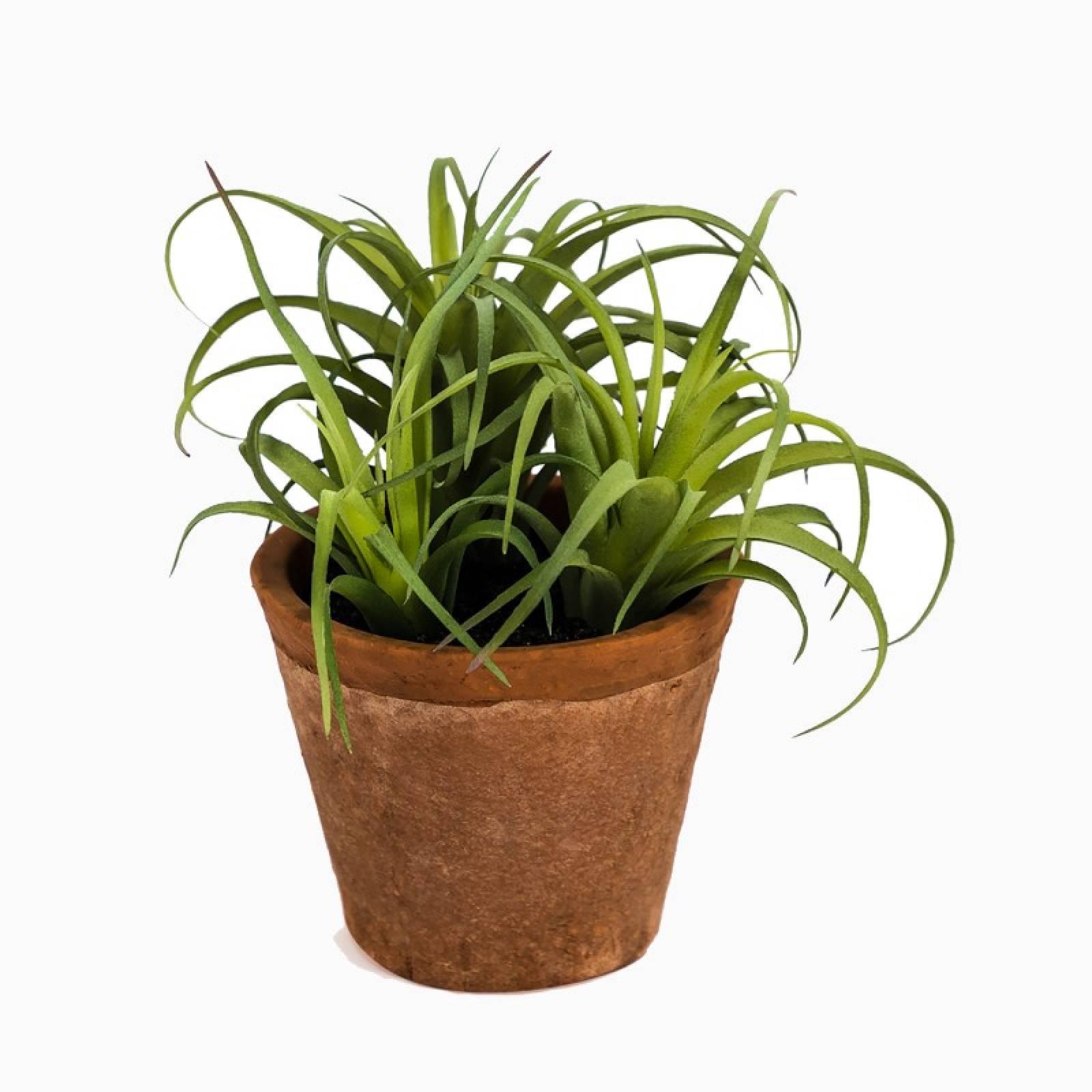 Faux Spider Succulent Plant In Terracotta Pot H:15cm