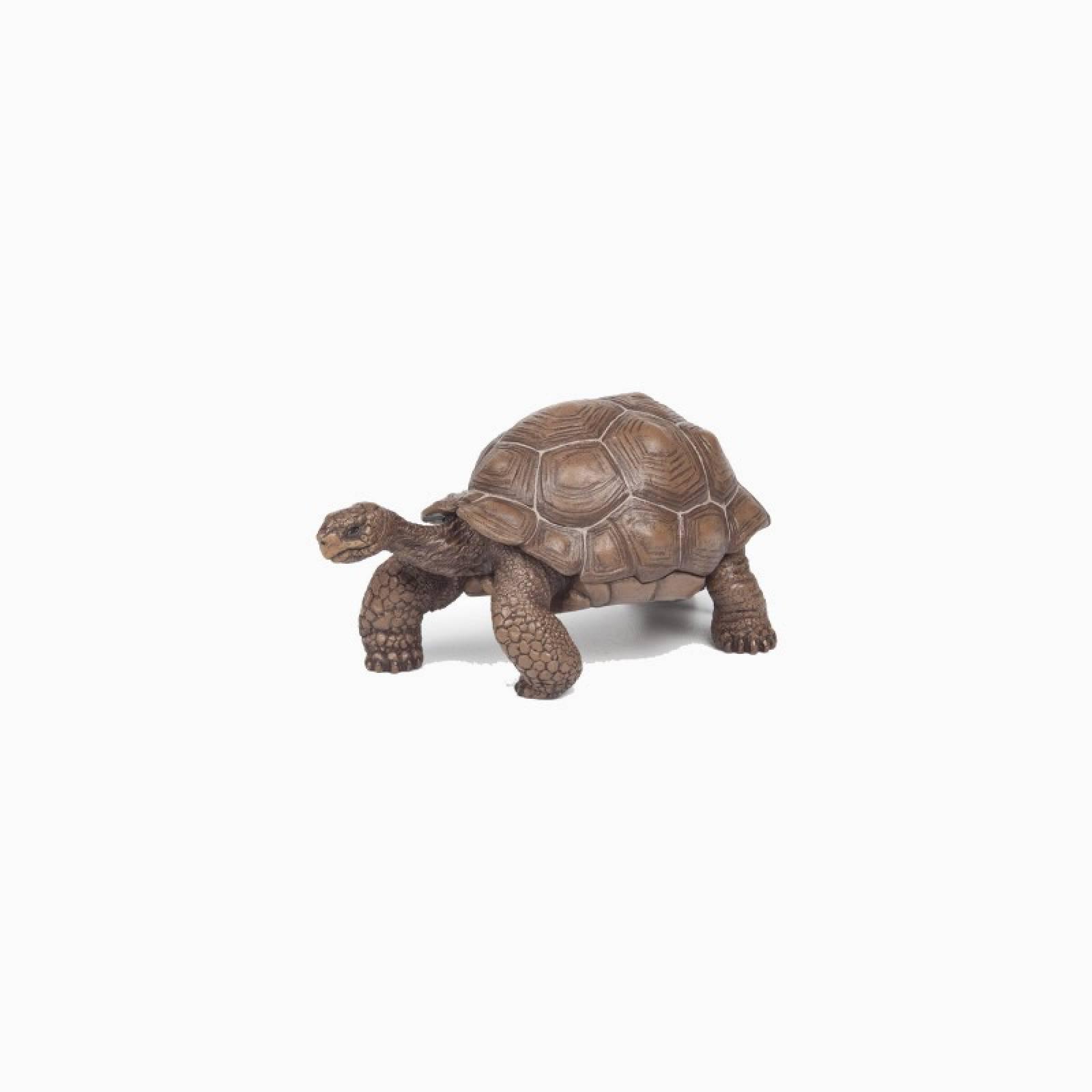 Galapagos Tortoise - Papo Wild Animal Figure