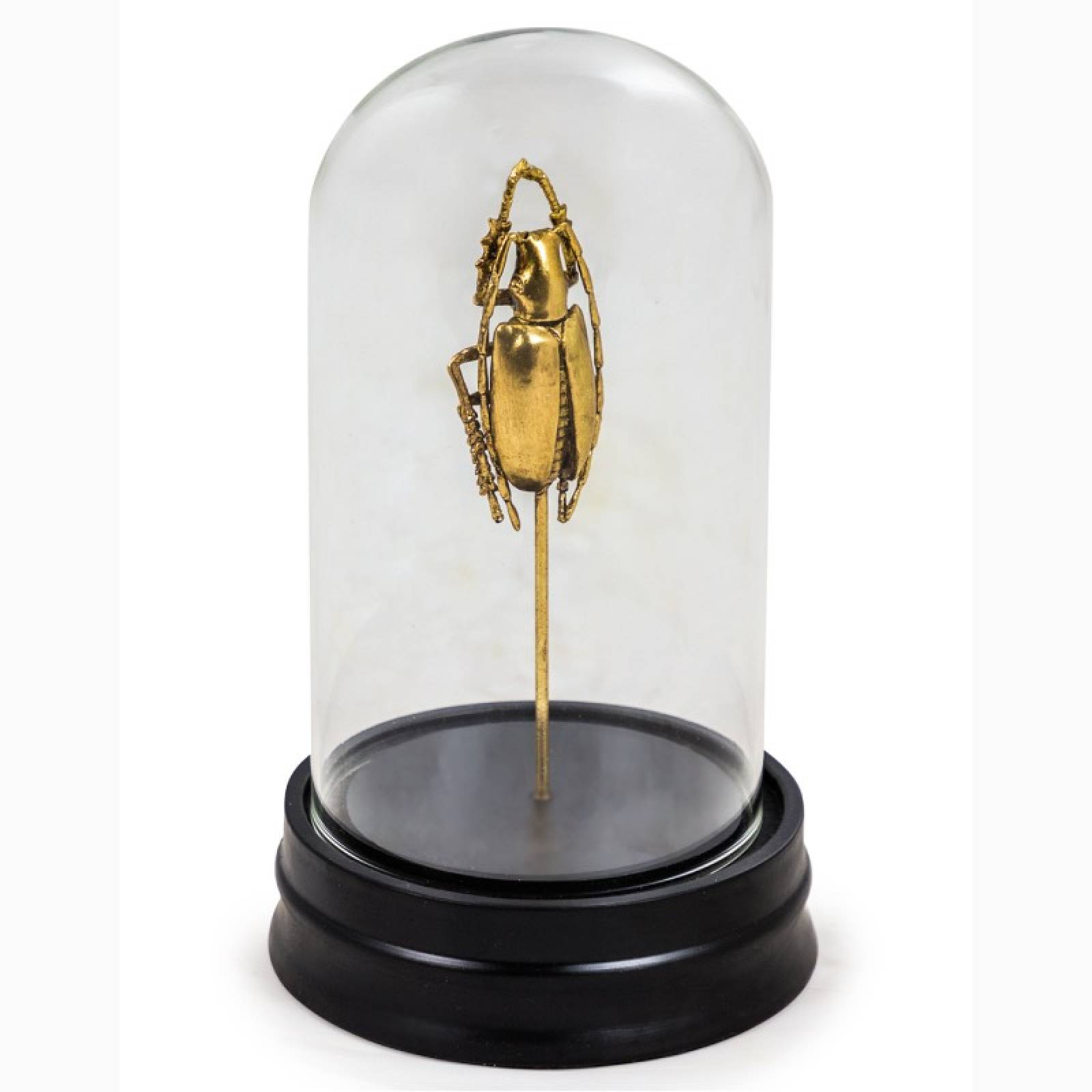 Golden Beetle Faux Specimen In Glass Dome With Base