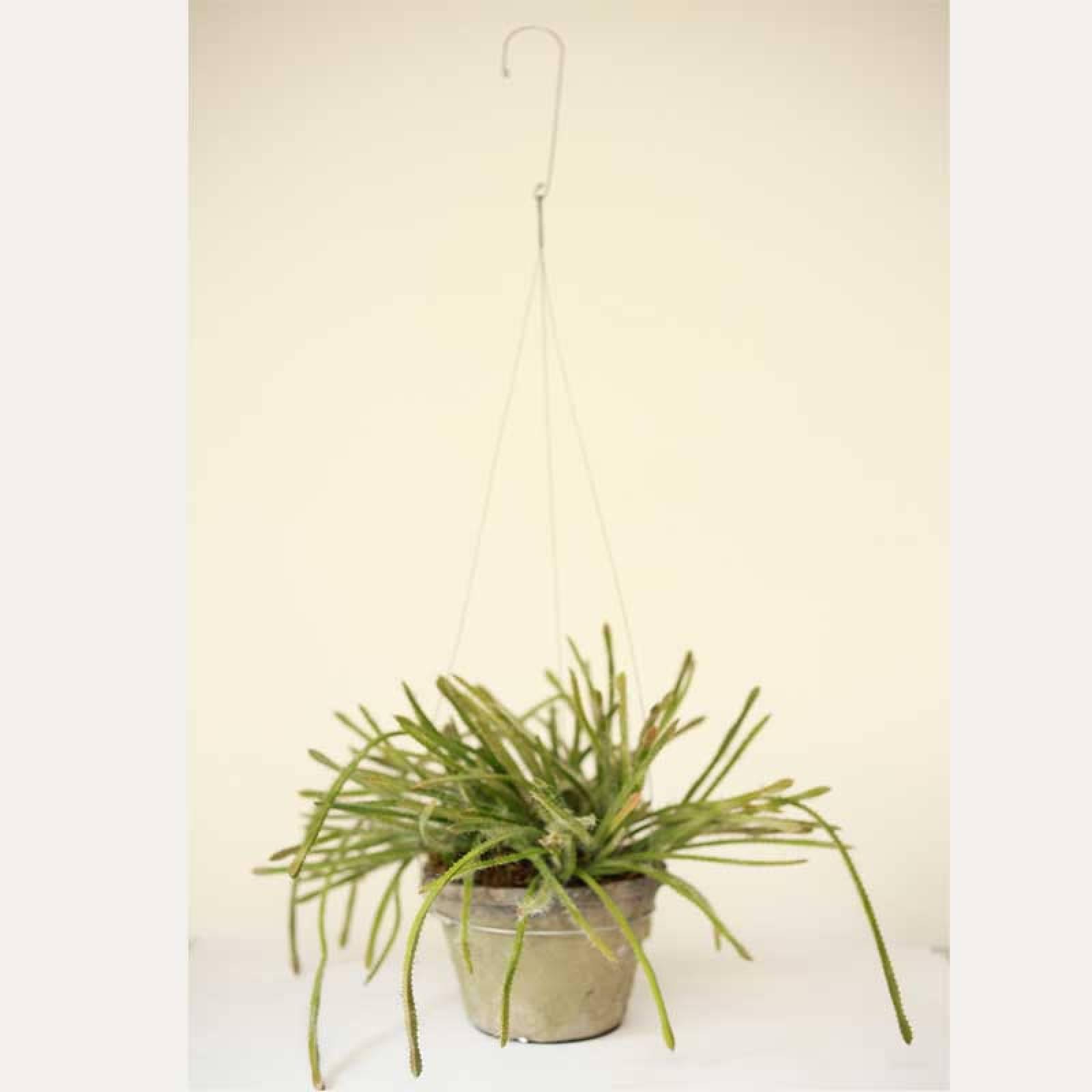 Hanging Faux Succulent Plant In Pot thumbnails