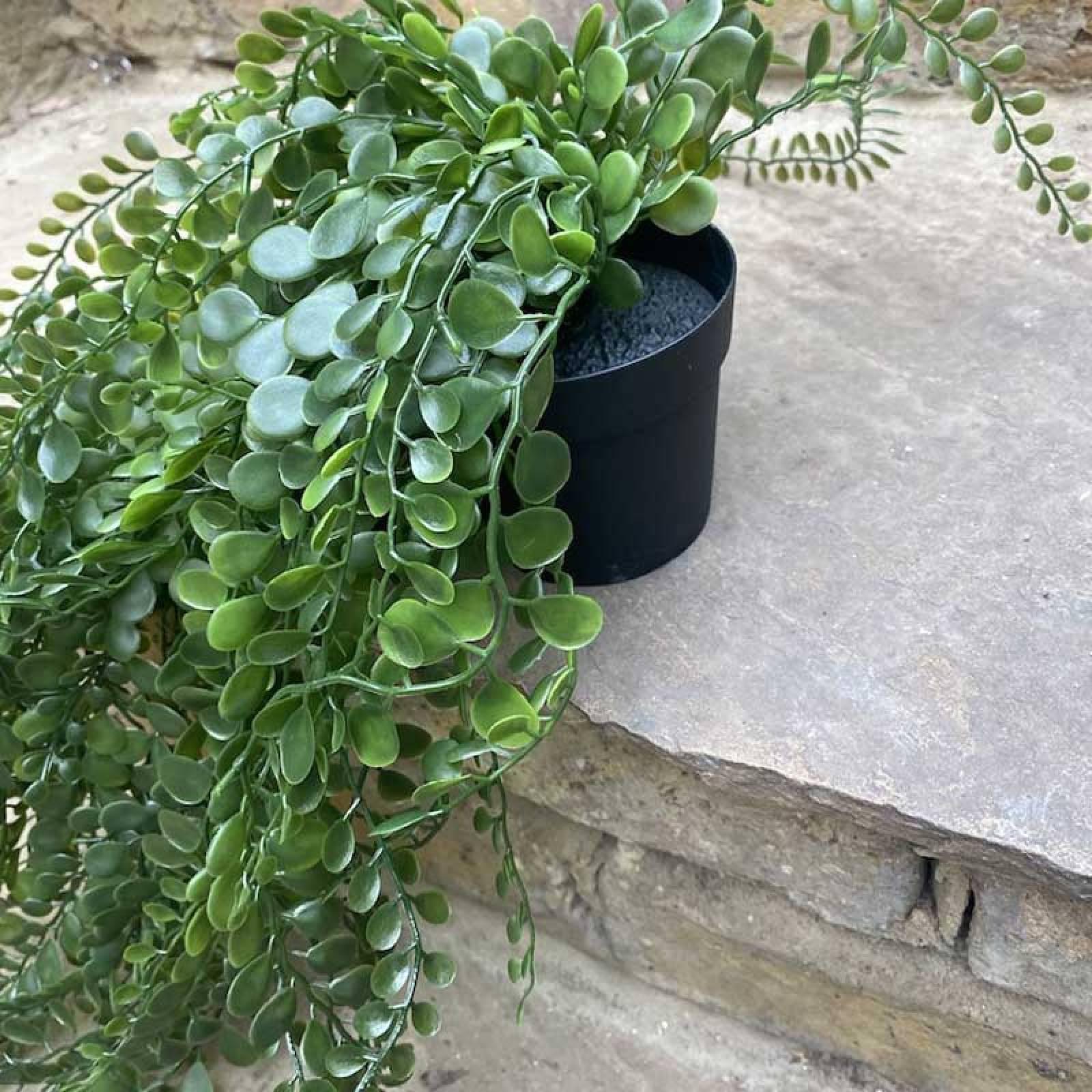 Hanging Pea Leaf Faux Potted Plant thumbnails