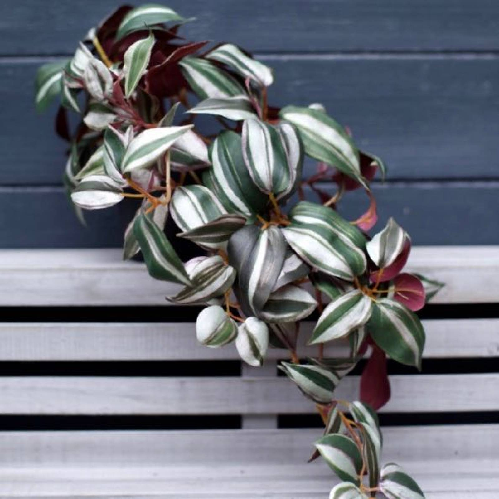 Faux Wandering Trailing Plant WIth Green & Purple Leaves H:24cm