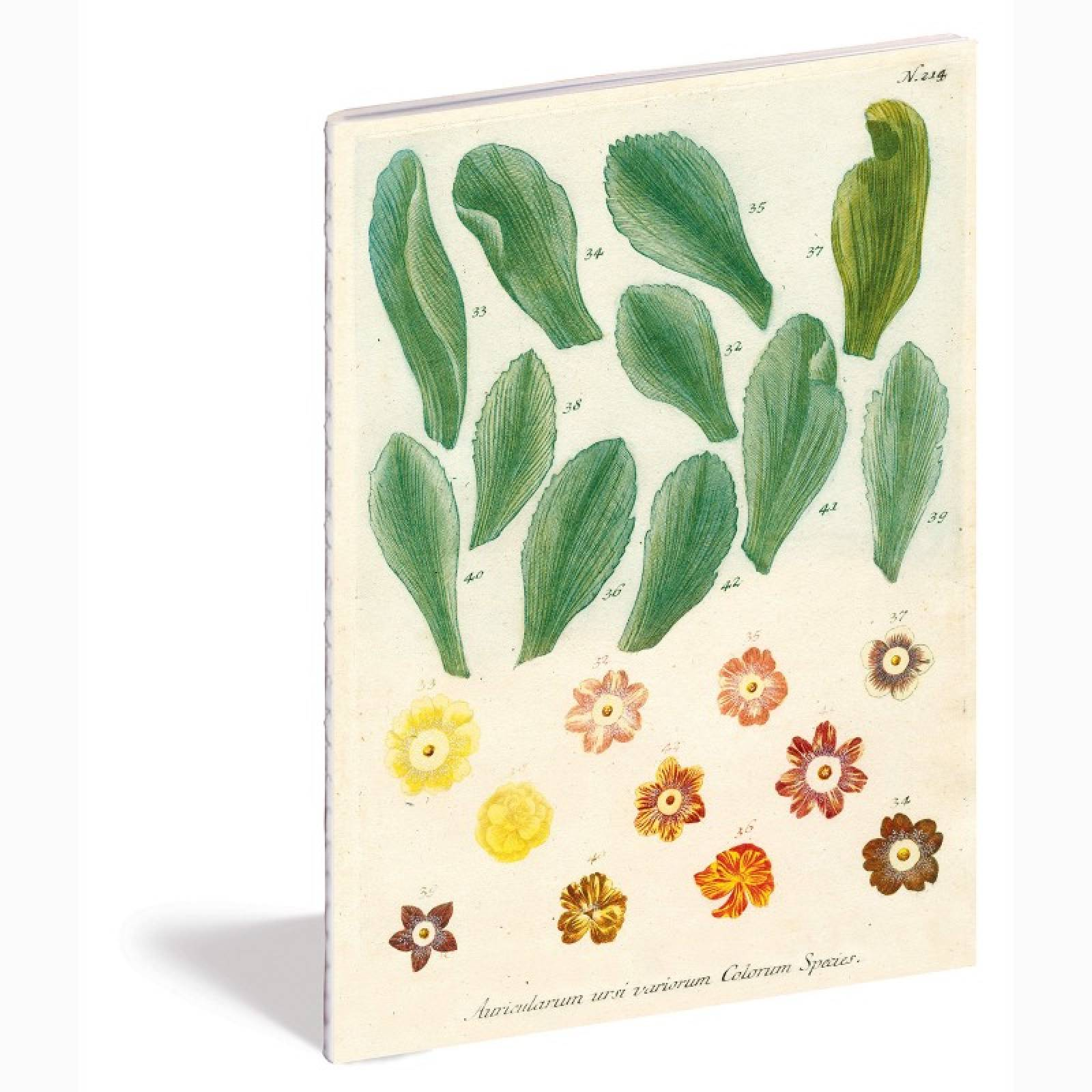 Kitchen Delights By John Derian - Set Of 3 Notebooks thumbnails