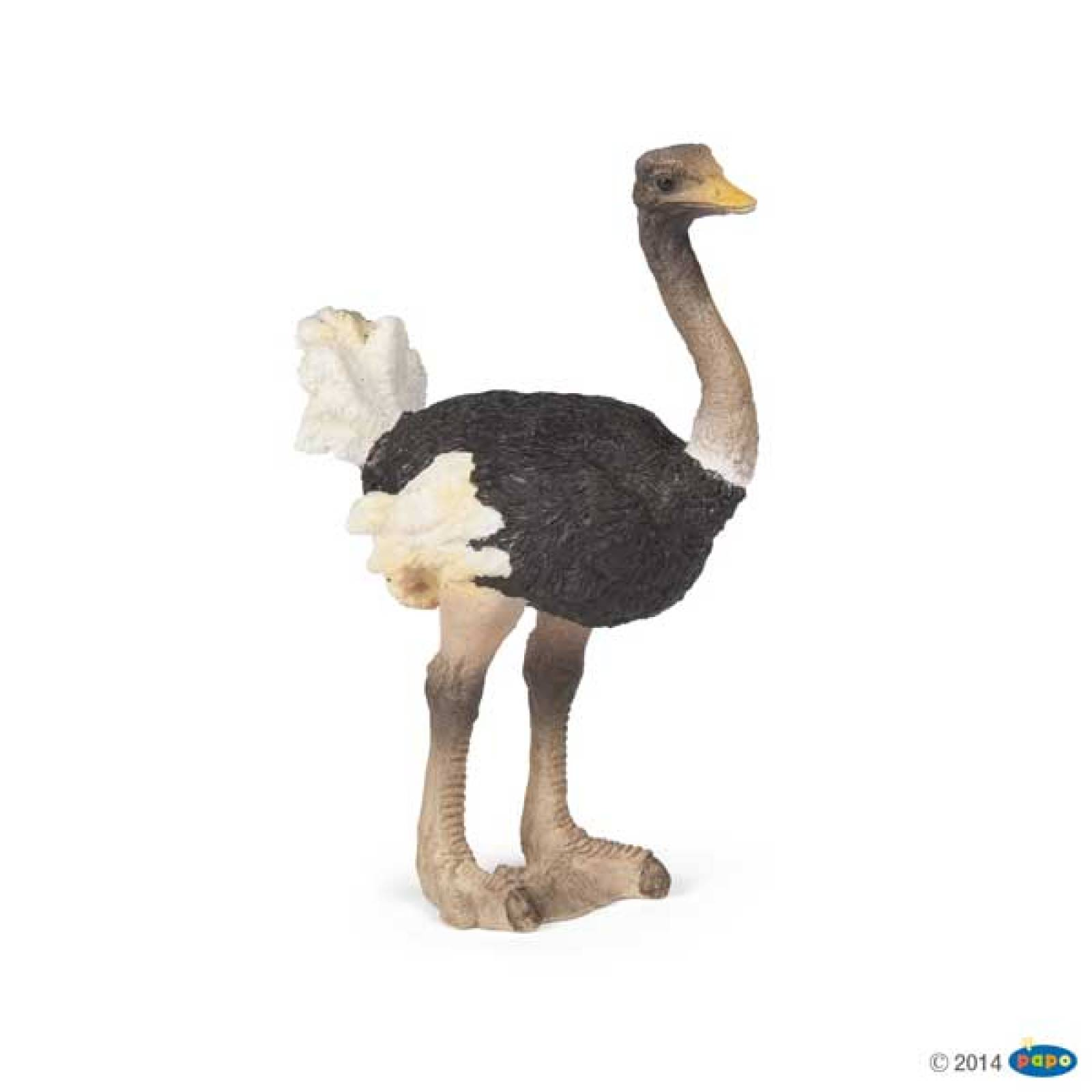 Ostrich PAPO WILD ANIMAL
