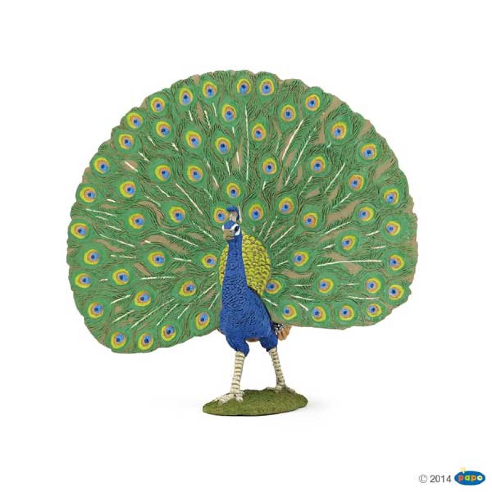 Peacock PAPO FARM ANIMAL