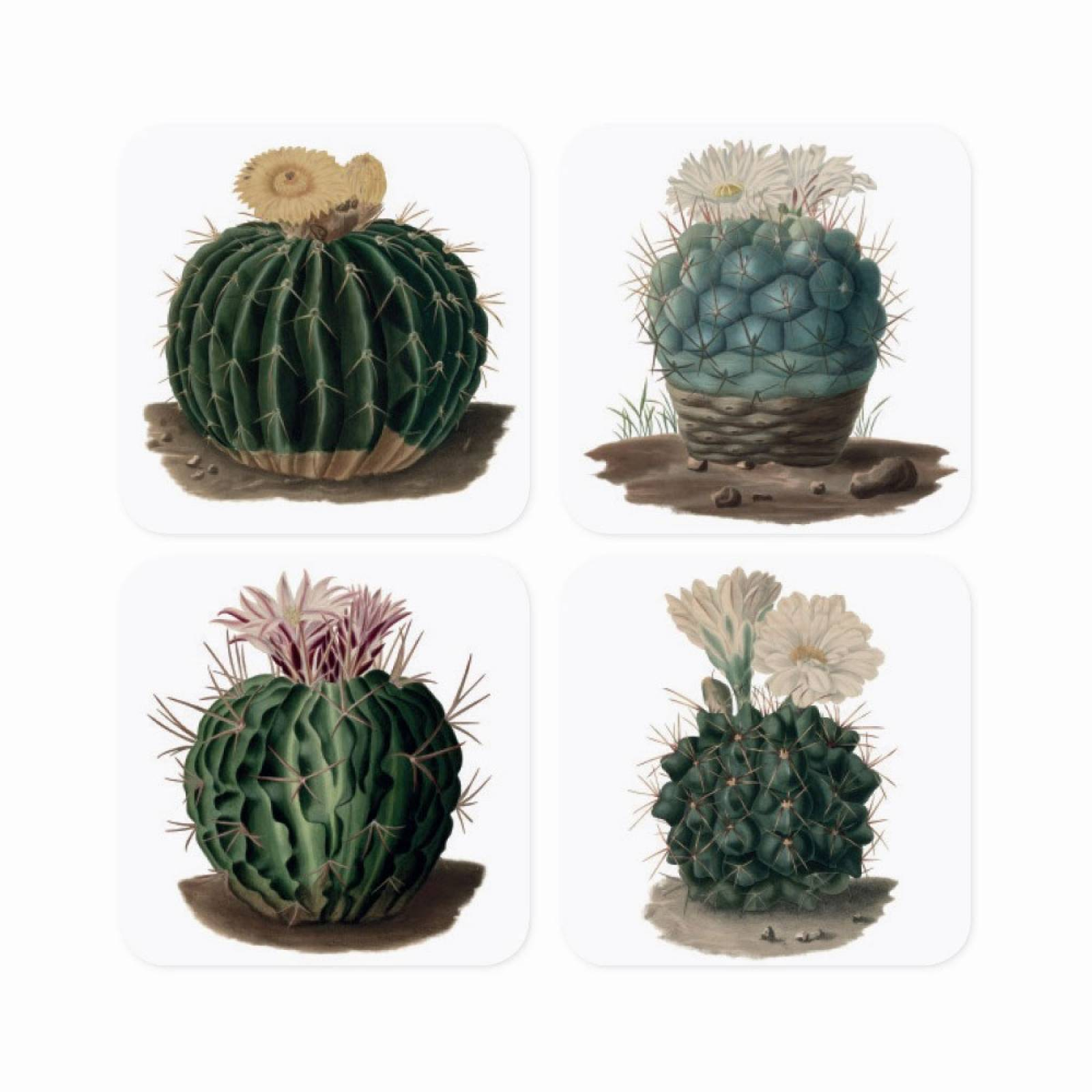 Set Of 4 Cactus Coasters