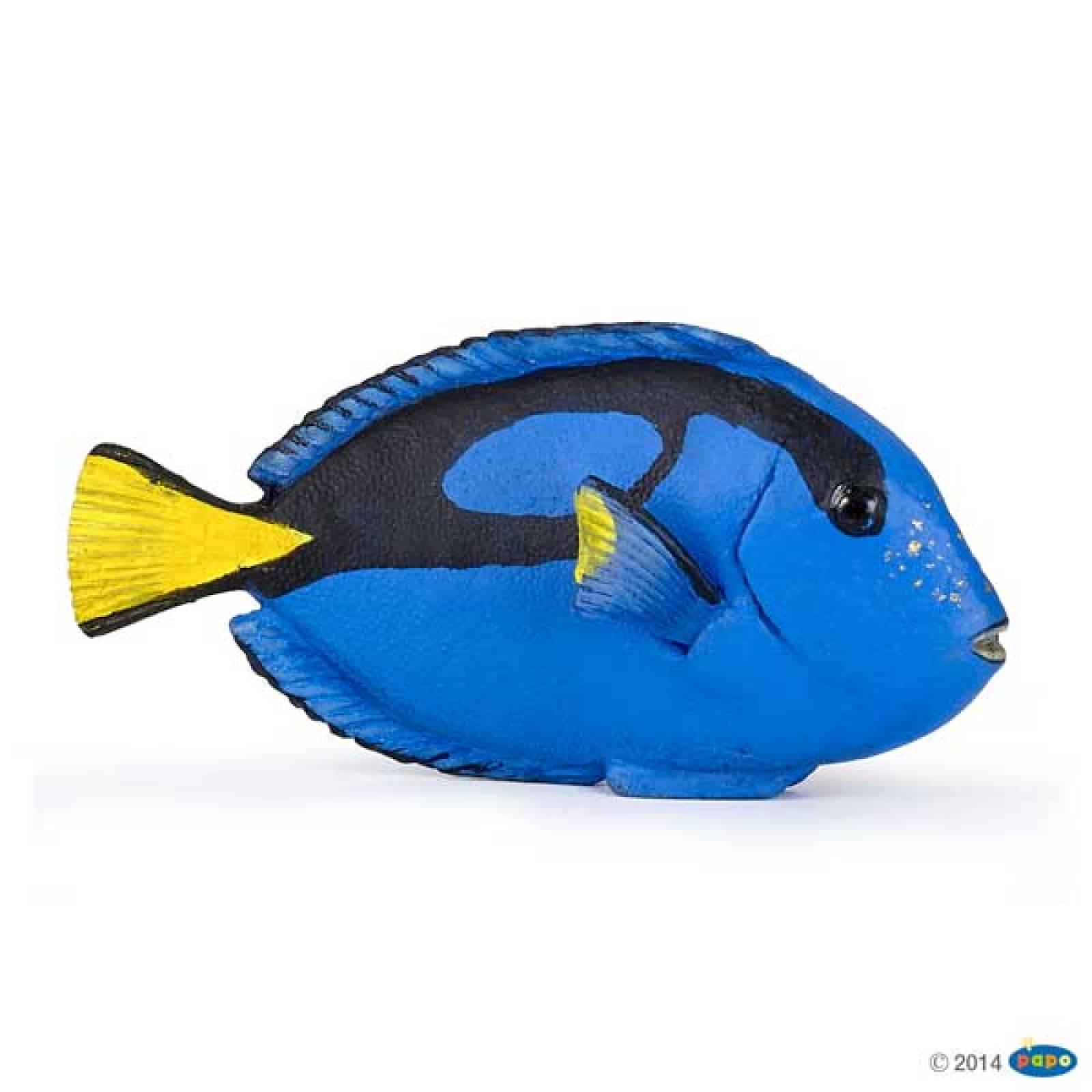 Surgeonfish PAPO WILD ANIMAL