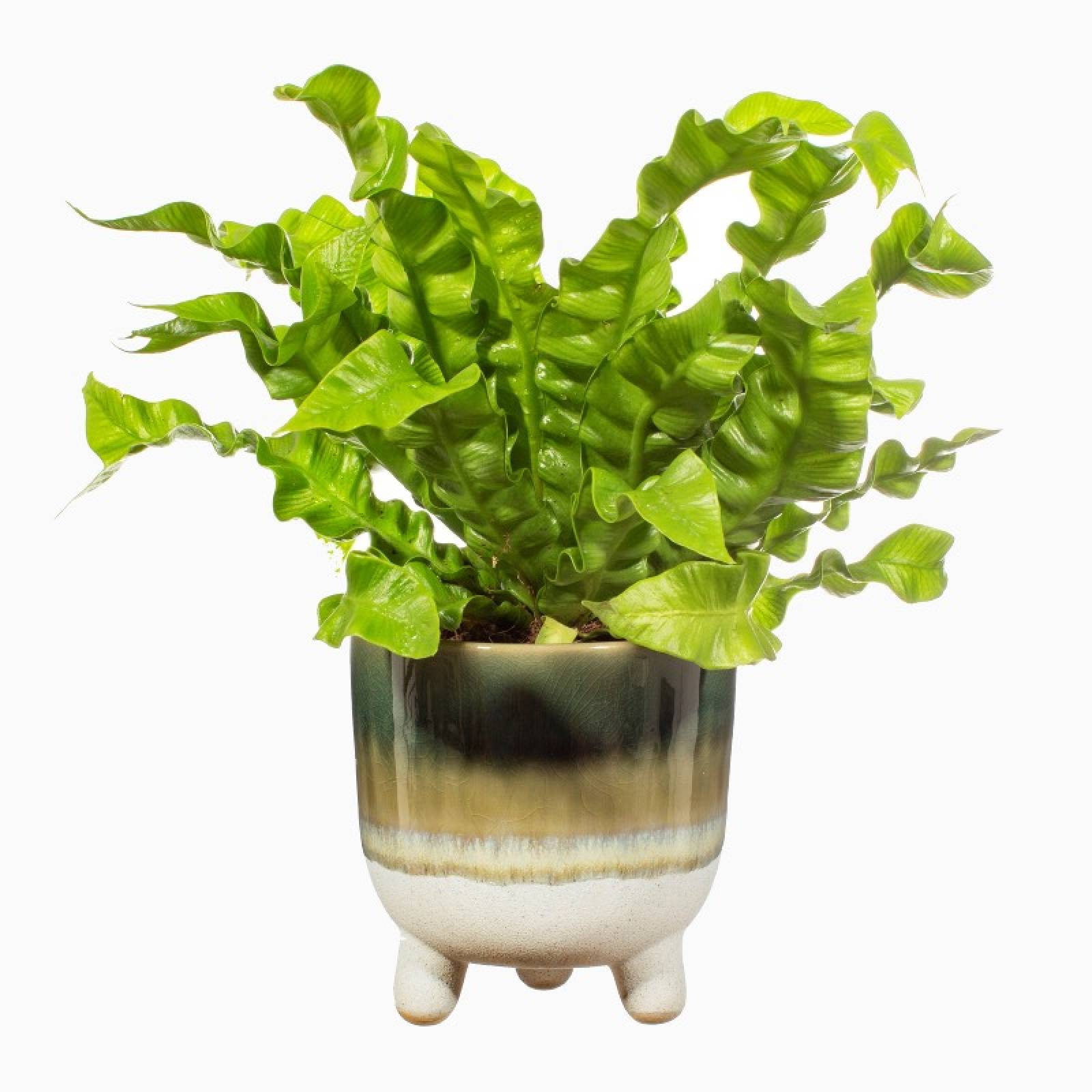 Two Tone Dip Glazed Stoneware Plant Pot In Green