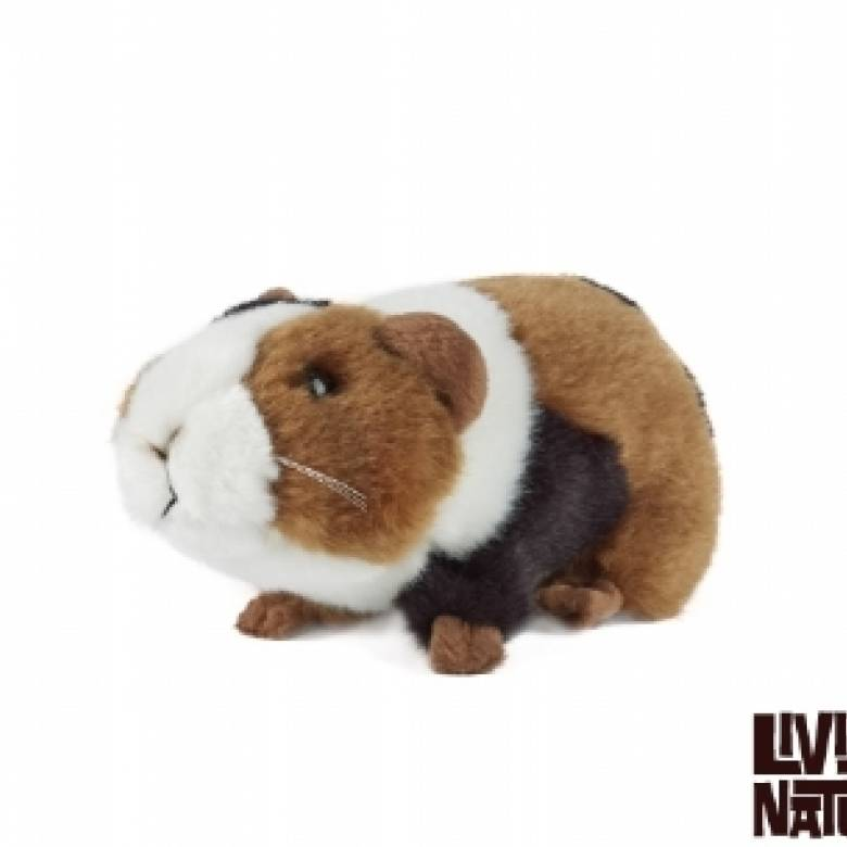 Guinea Pig Soft Toy Small 18cm