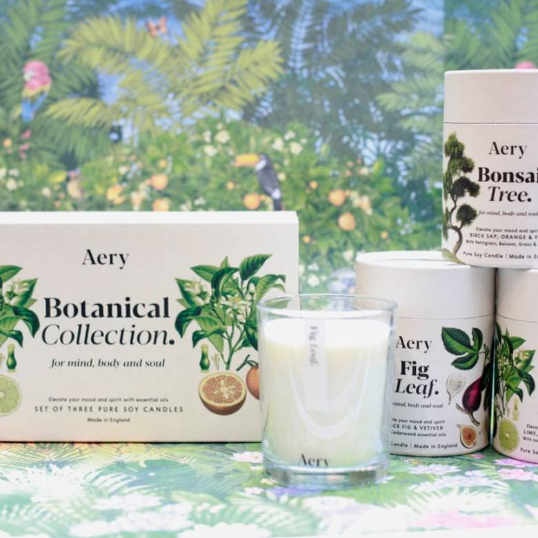 Bonsai Tree Boxed Candle By Aery