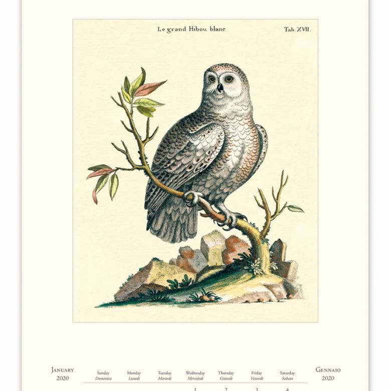 Vintage Birds Wall Calendar By Cavallini