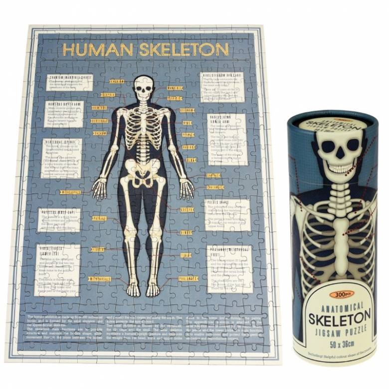 Anatomical Skeleton Puzzle In Tube Box