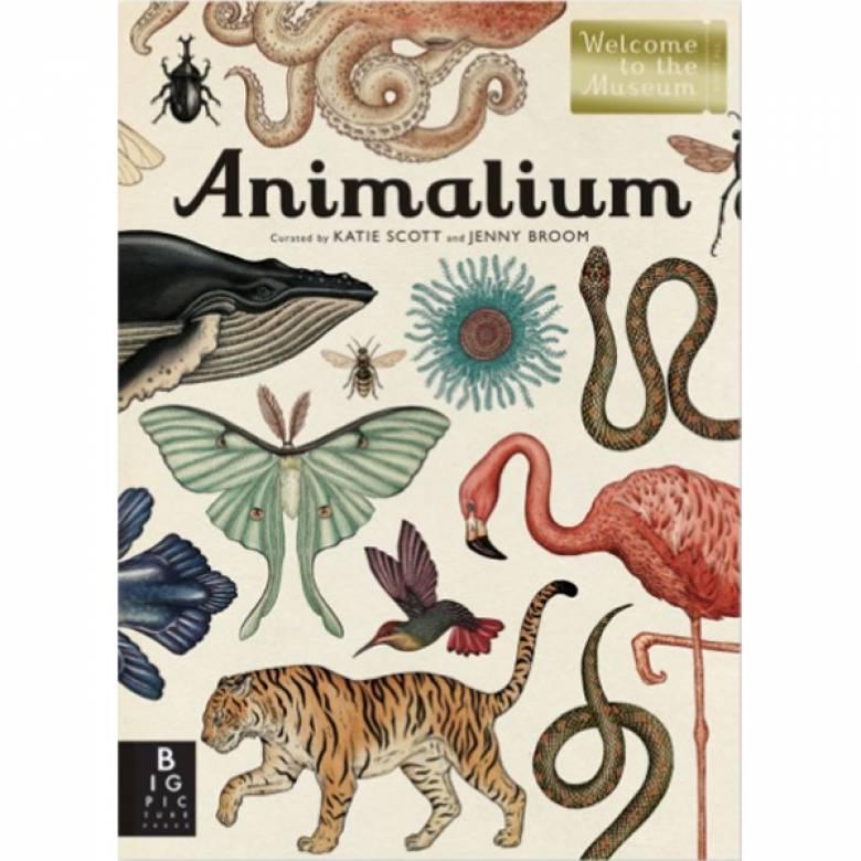 Animalium Hardback Book