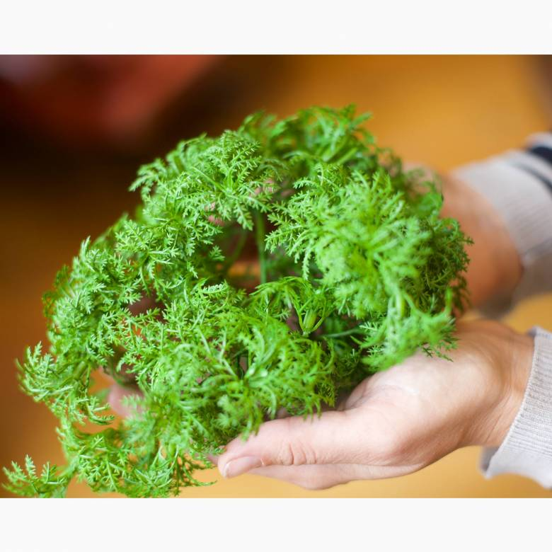 Faux Green Tropical Moss Bunch