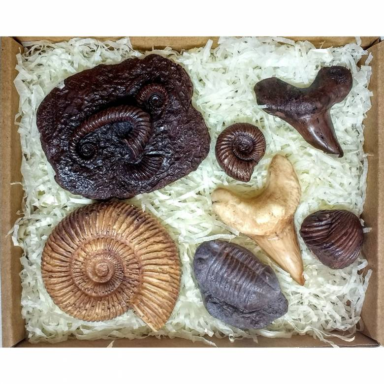 Bitesize Chocolate Fossil Box By The Edible Museum