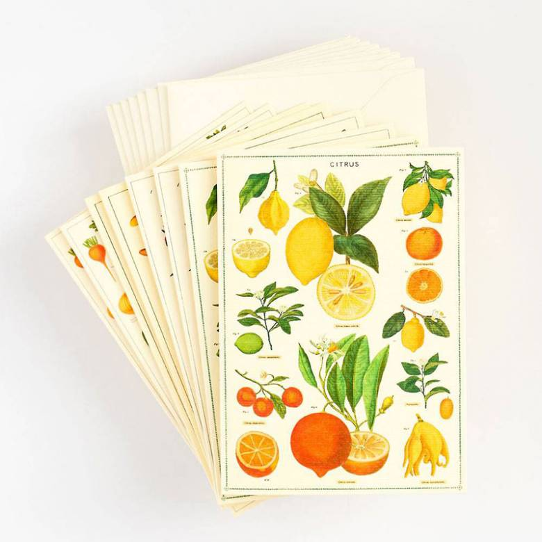 Box Of 8 Notecards And Envelopes - Jardin