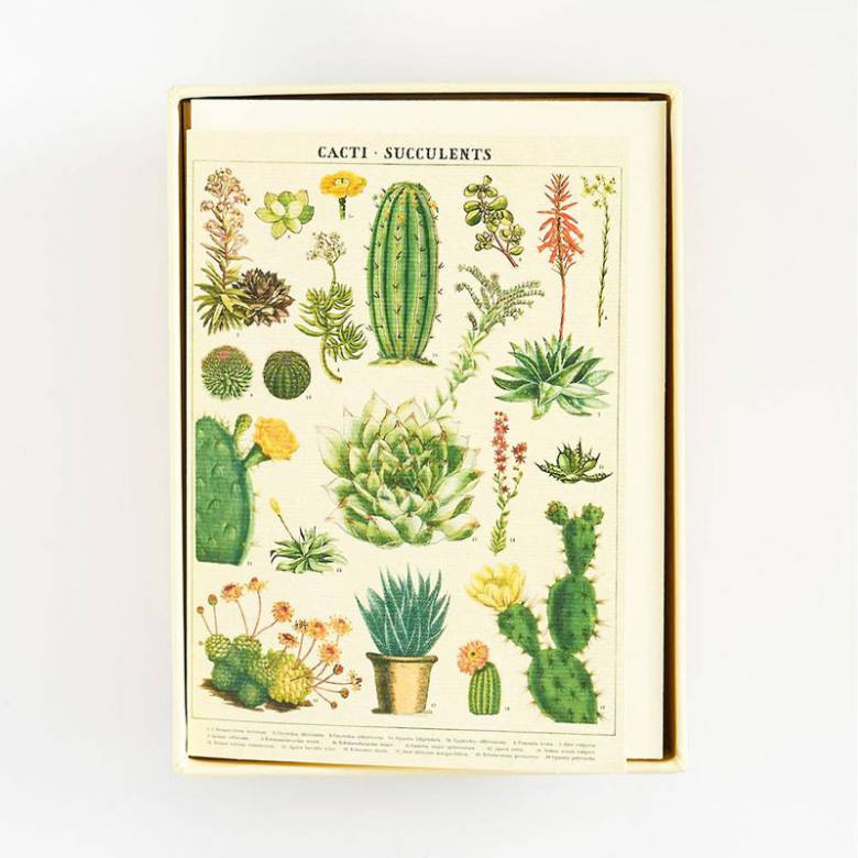 Box Of 8 Notecards And Envelopes - Succulents