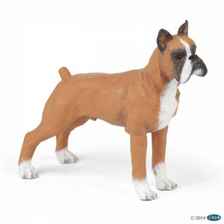 Boxer Dog PAPO ANIMAL