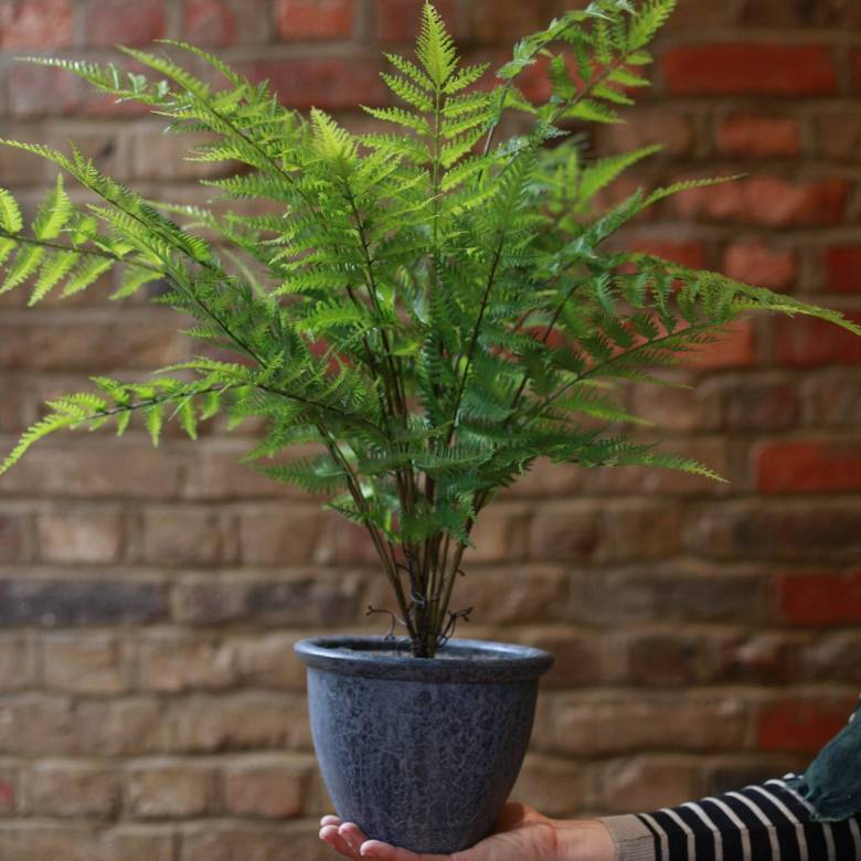 Faux Bracken Fern Bush Plant In Grey Pot