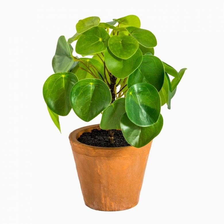 Faux Money Plant In Terracotta Pot H:23cm