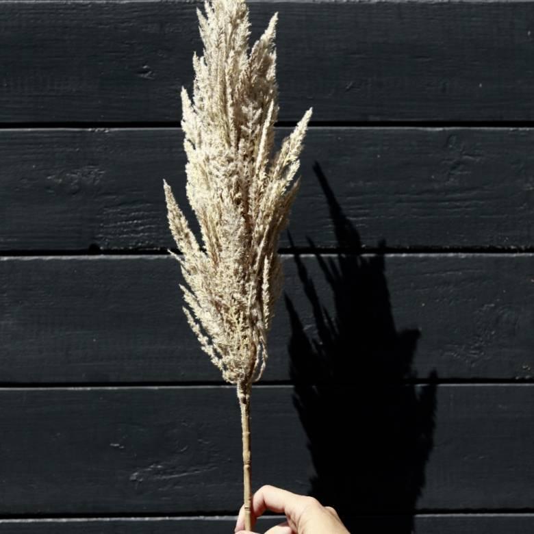 Faux Beige Pampas Grass Spray