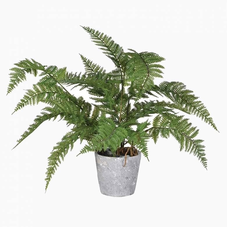 Green Artificial Fern Plant In Cement Pot