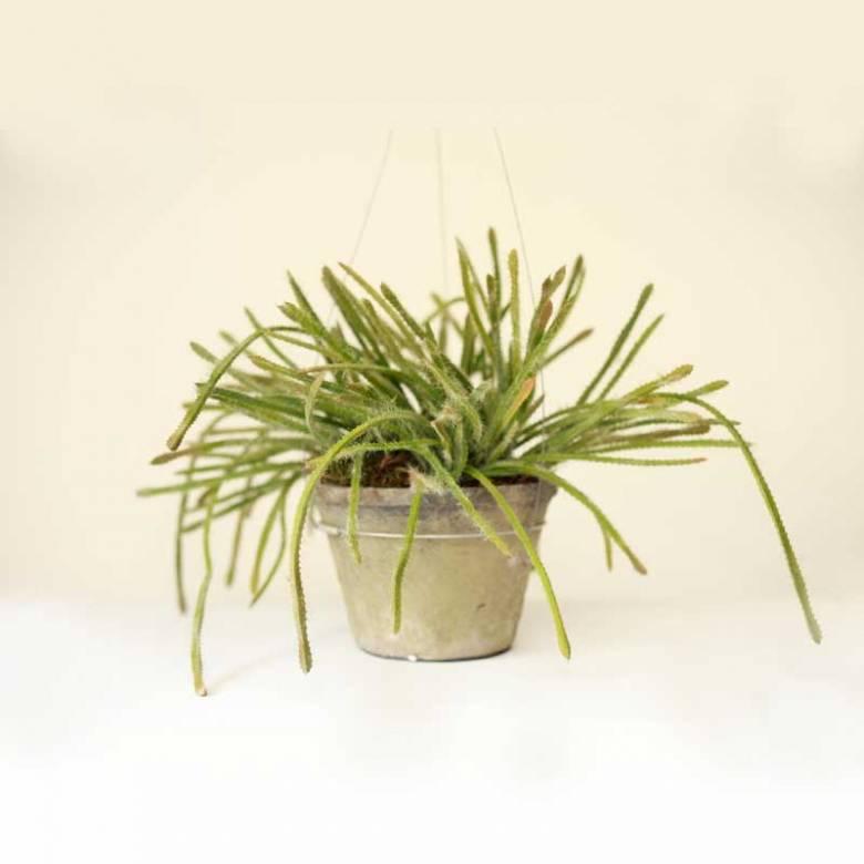 Hanging Faux Succulent Plant In Pot
