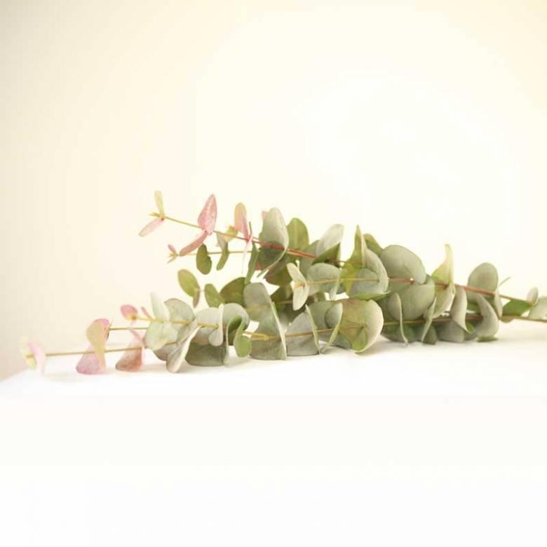 Large Natural Blush Eucalyptus Spray