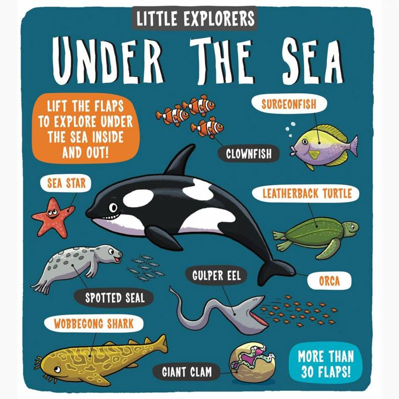 Little Explorers: Under The Sea - Hardback Book