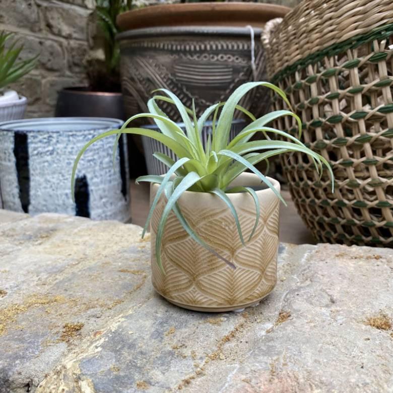 Mini Wavy Ceramic Flower Pot Cover In Mustard