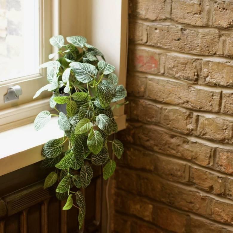 Faux Trailing Fittonia Plant In Black Pot H:23cm