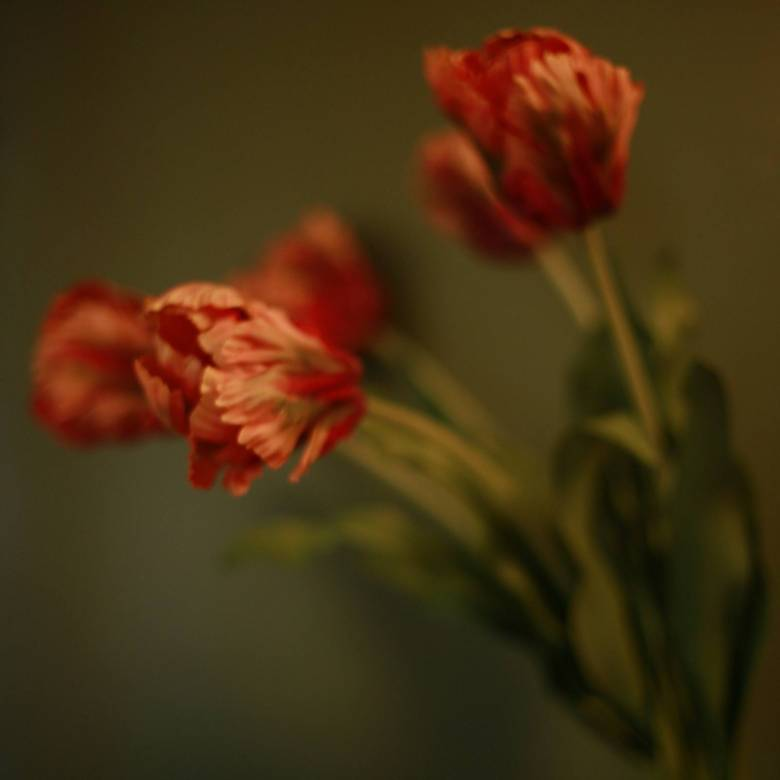 Faux Single Parrot Tulip Flower In Coral
