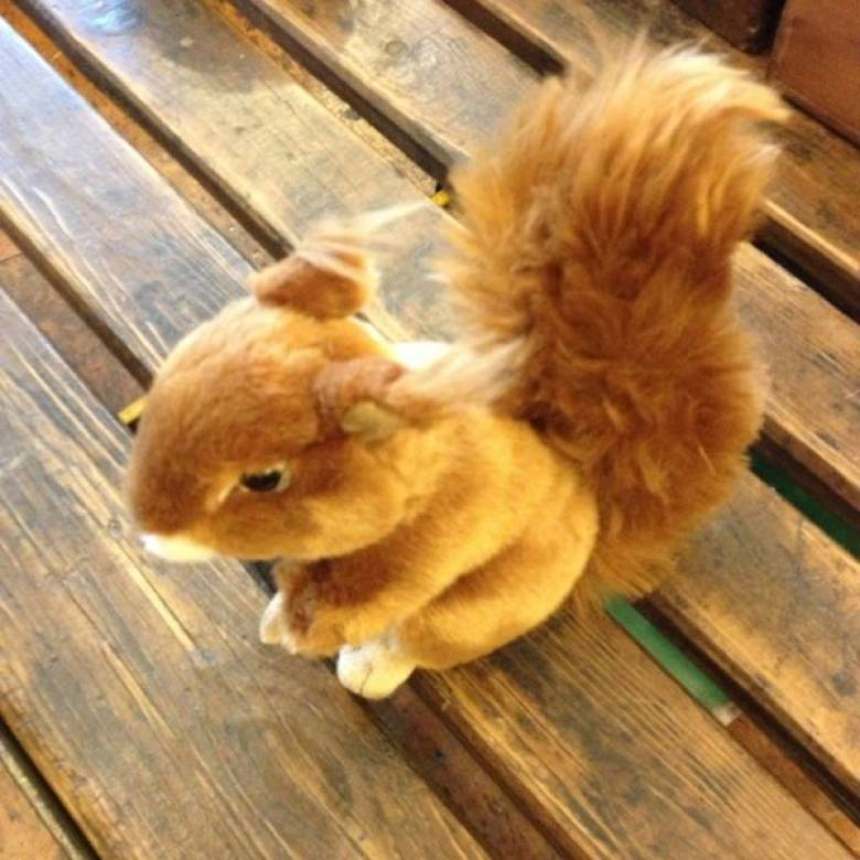 Squirrel Soft Toy 20cm 0+yrs