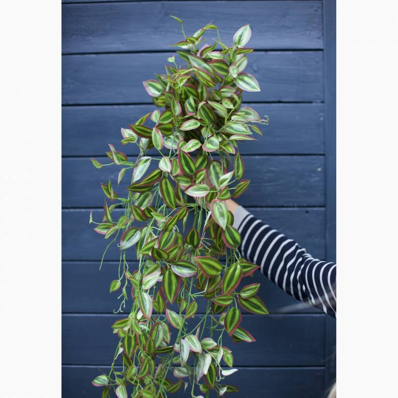Faux Green And Pink Tradescantia Hanging Plant
