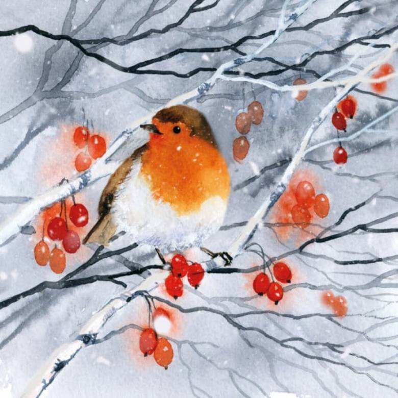 Robin, Snow And Berries - Pack Of 8 Christmas Cards By M&G