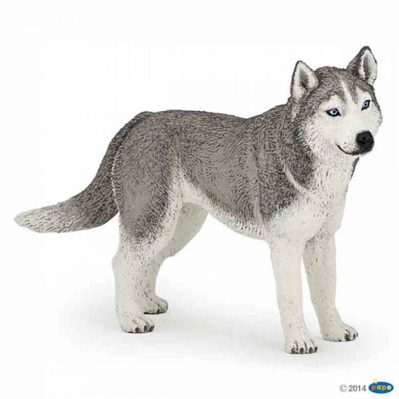 Siberian Husky Dog PAPO ANIMAL