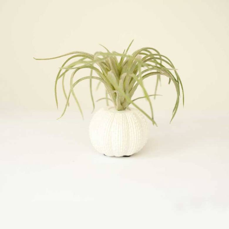 Small Faux Green Tillandsia Plant In Urchin Pot