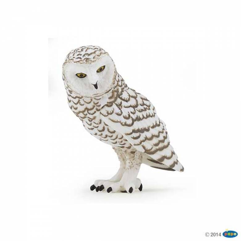 Snowy Owl PAPO ANIMAL